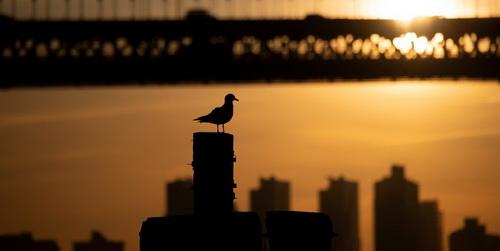 Небоскребы США убивают до 1 млрд птиц в год