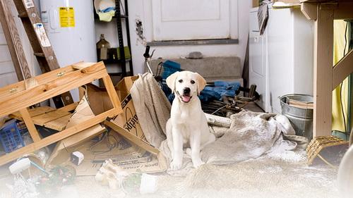 Россияне чаще всего делают ремонт из-за домашних животных