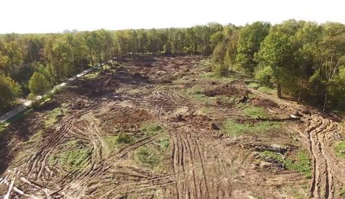 Минприроды разрешило застройку лесов